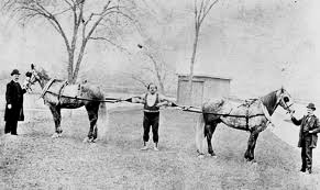louis cyr strongest man in the world, pull of four draught horses